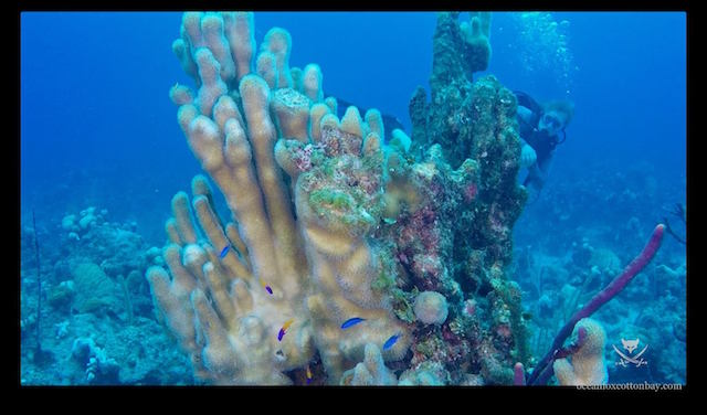 Just amazing coral.....
