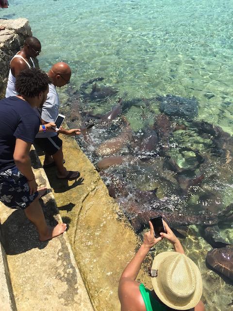 Feeding the nurse sharks at Staniel Cay