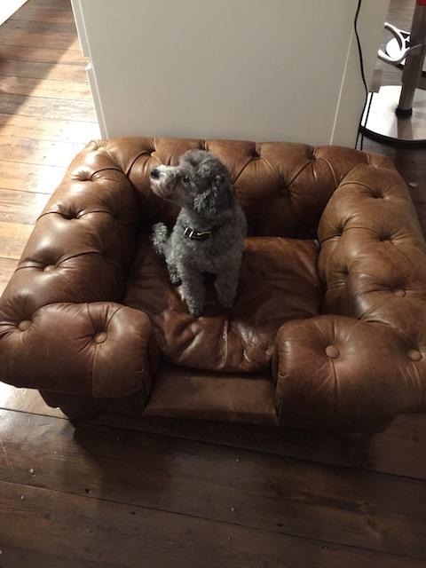 Clara in her swanky bed !