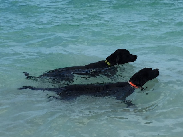 Rudge and Rufus keeping cool !