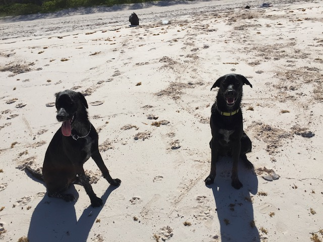 Good boys at the beach !