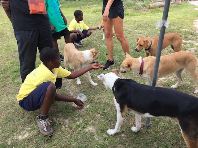 Sarah brought her dogs along on the Friday and it was great for everyone to be able to pet and feed these beautifully behaved potcakes - the socializing aspect was great for the dogs and the competitors...
